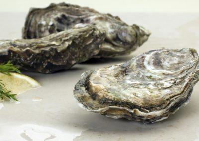 Στρείδια / Oysters / Crassostrea gigas